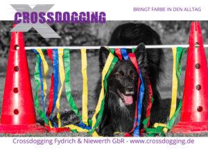 BiA Crossdogging @ Hundetrainingsplatz | Glauchau | Sachsen | Deutschland